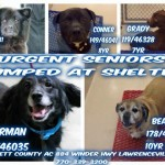 Adoptable Dogs for August 19, 2015