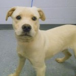 Adoptable Georgia Dogs for October 14, 2015