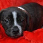 Adoptable Georgia Dogs for October 27, 2015