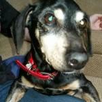 Adoptable Georgia Dogs for November 19, 2015