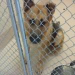Adoptable Georgia Dogs for December 16, 2015