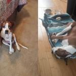 Adoptable Georgia Dogs for January 19, 2016