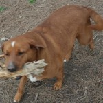 Adoptable Georgia Dogs for March 9, 2016