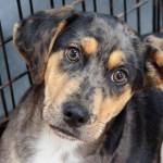 Adoptable Georgia Dogs for April 13, 2016