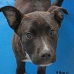 Adoptable Georgia Dogs for April 11, 2016