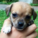 Adoptable Georgia Dogs for June 30, 2016