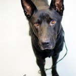 Adoptable (Official) Georgia Dogs for August 10, 2016