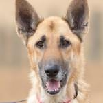 Adoptable (Official) Georgia Dogs for November 28, 2016