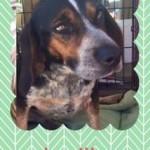 Adoptable (Official) Georgia Dogs for November 10, 2016
