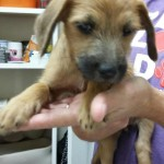 Adoptable (Official) Georgia Dogs for December 19, 2016