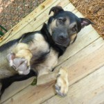 Adoptable (Official) Georgia Dogs for March 17, 2017