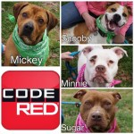 Adoptable (Official) Georgia Dogs for April 6, 2017