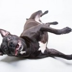 Adoptable (Official) Georgia Dogs for April 14, 2017