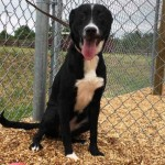 Adoptable (Official) Georgia Dogs for May 12, 2017