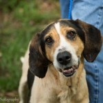 Adoptable (Official) Georgia Dogs for May 2, 2017