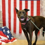Adoptable (Official) Georgia Dogs for June 5, 2017