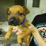 Adoptable (Official) Georgia Dogs for June 19, 2017
