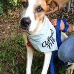Adoptable (Official) Georgia Dogs for July 31, 2017