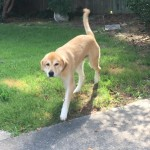 Adoptable (Official) Georgia Dogs for August 21, 2017