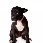 Adoptable (Official) Georgia Dogs for September 6, 2017