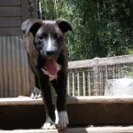 Adoptable (Official) Georgia Dogs for October 18, 2017