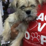 Adoptable (Official) Georgia Dogs for October 6, 2017