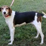 Adoptable (Official) Georgia Dogs for December 19, 2017