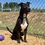 Adoptable (Official) Georgia Dogs for December 5, 2017