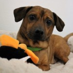 Adoptable (Official) Georgia Dogs for January 18, 2018