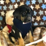 Adoptable (Official) Georgia Dogs for January 12, 2018