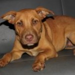 Adoptable (Official) Georgia Dogs for January 11, 2018