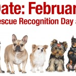 Adoptable (Official) Georgia Dogs for February 8, 2018