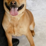 Adoptable (Official) Georgia Dogs for March 23, 2018