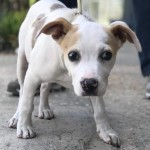 Adoptable (Official) Georgia Dogs for May 24, 2018