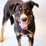 Adoptable (Official) Georgia Dogs for May 14, 2018
