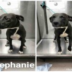 Adoptable (Official) Georgia Dogs for October 2, 2018
