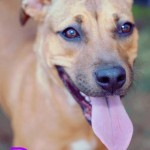 Adoptable (Official) Georgia Dogs for October 16, 2018