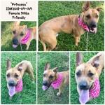 Adoptable (Official) Georgia Dogs for November 5, 2018