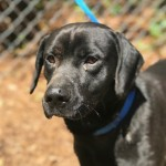 Adoptable (Official) Georgia Dogs (and one cat) for May 21, 2019