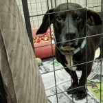 Adoptable (Official) Georgia Dogs for May 14, 2019