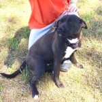 Adoptable (Official) Georgia Dogs for May 29, 2019