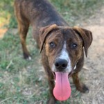 Adoptable (Official) Georgia Dogs for June 6, 2019
