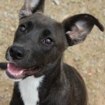 Adoptable (Official) Georgia Dogs for June 11, 2019