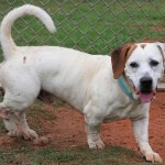 Adoptable (Official) Georgia Dogs for August 9, 2019
