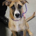 Adoptable (Official) Georgia Dogs for August 1, 2019