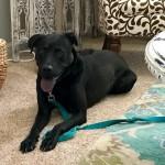 Adoptable (Official) Georgia Dogs for September 23, 2019