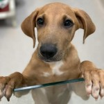 Adoptable (Official) Georgia Dogs for September 4, 2019