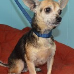 Adoptable (Official) Georgia Dogs for October 18, 2019
