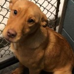 Adoptable (Official) Georgia Dogs for February 25, 2020