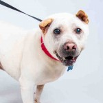 Adoptable (Official) Georgia Dogs for February 15, 2020